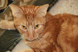 cat img 1